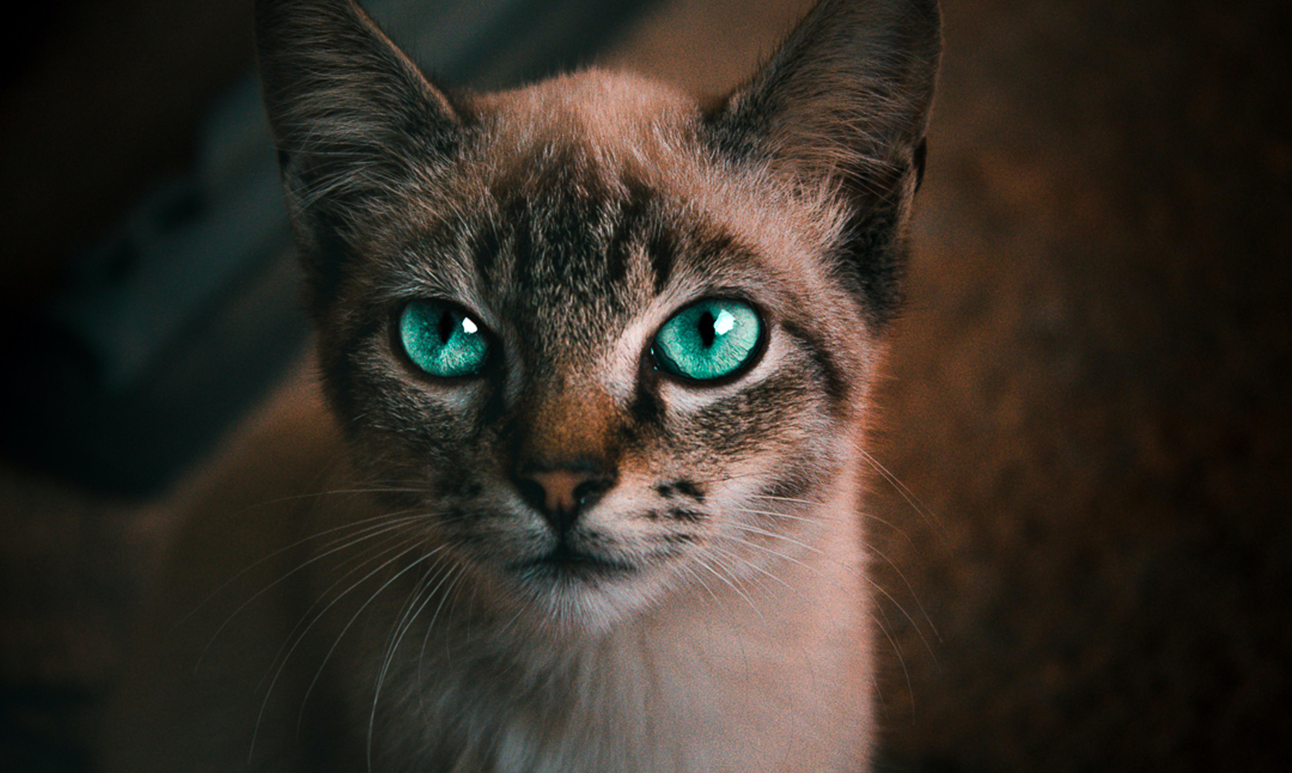 Expectativa  de vida do gato pode dobrar após a castração!